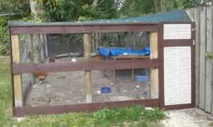 'Tara' for Fricken Chickens