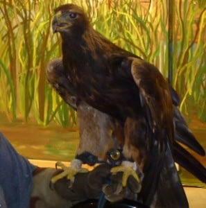 a eagle