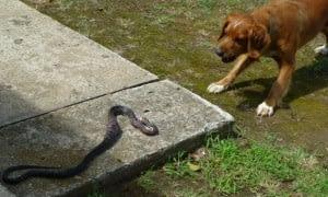 katy and snake 2